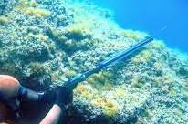 Speerfischen in Alor