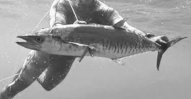 Speerfischen in Lombok