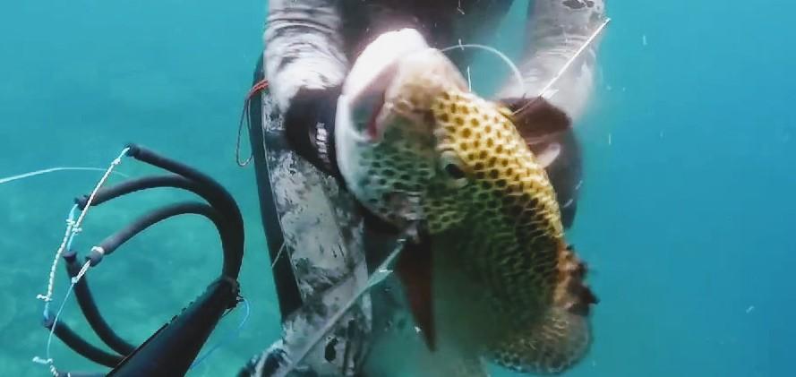 Speerfischen auf Molukken